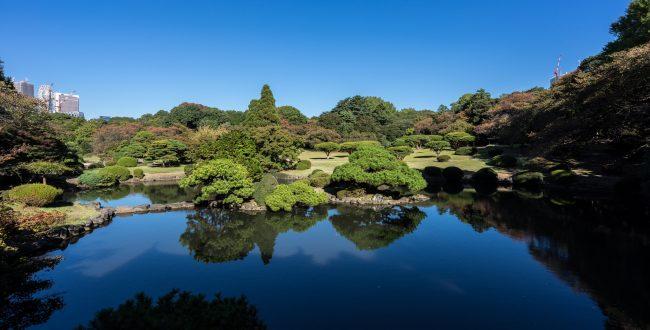新宿御苑の風景:東京・新潟のKKC(財)教育研修コーチング協会